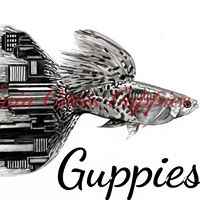 Twin Cities Guppies