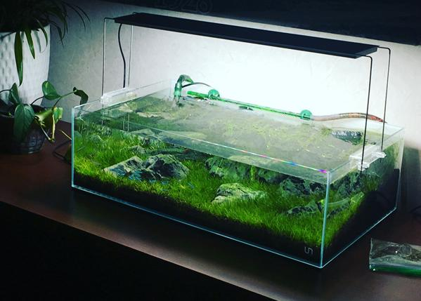 Dan Rowe's aquascaped tank