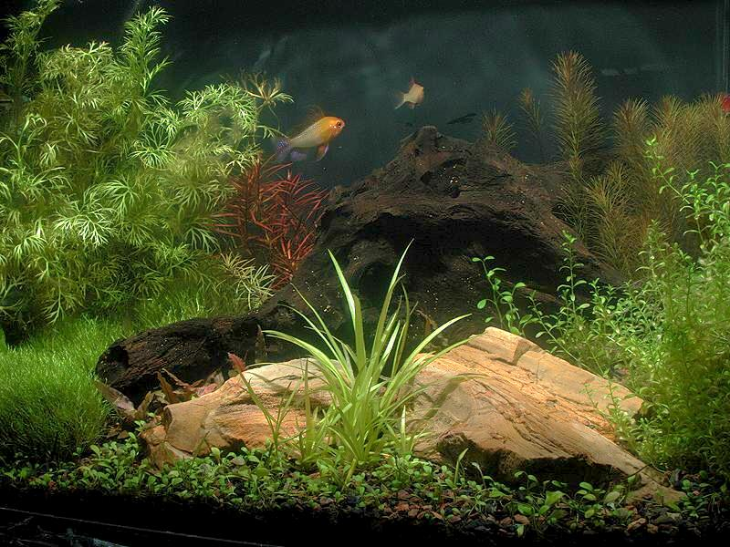 5 Gallon Aquascape Challenge Monthly Meeting